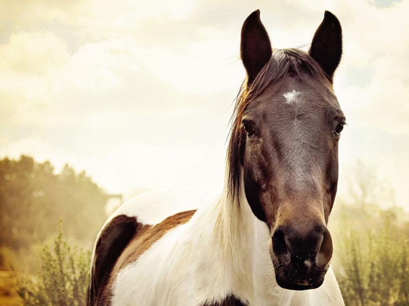 dieren homeopathie